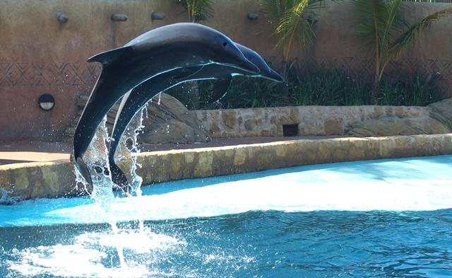 Dolphin Show at uShaka Marine World