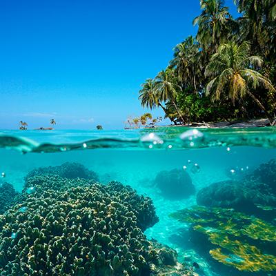 Tropical Islands in North America