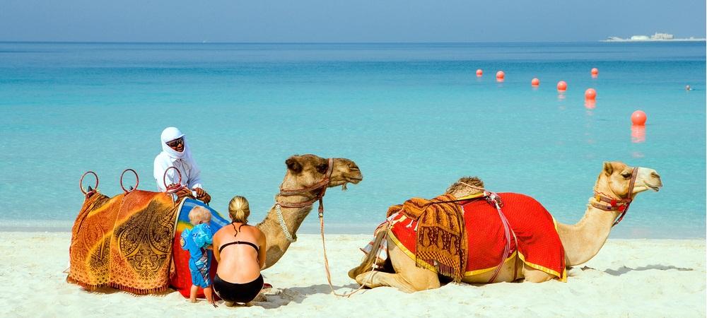 Dubai camel on the beach