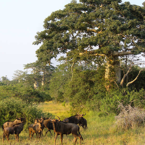 luanda kissama national park